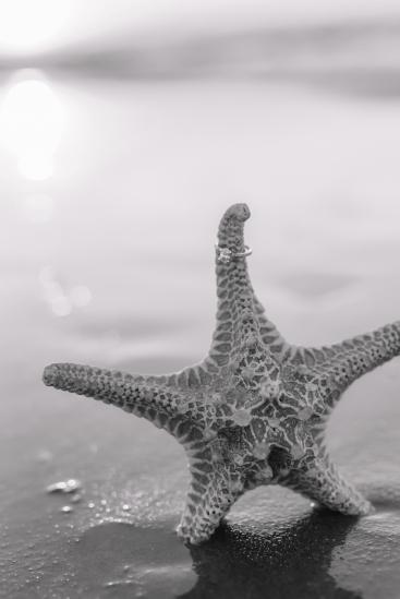starfish engagement ring pic